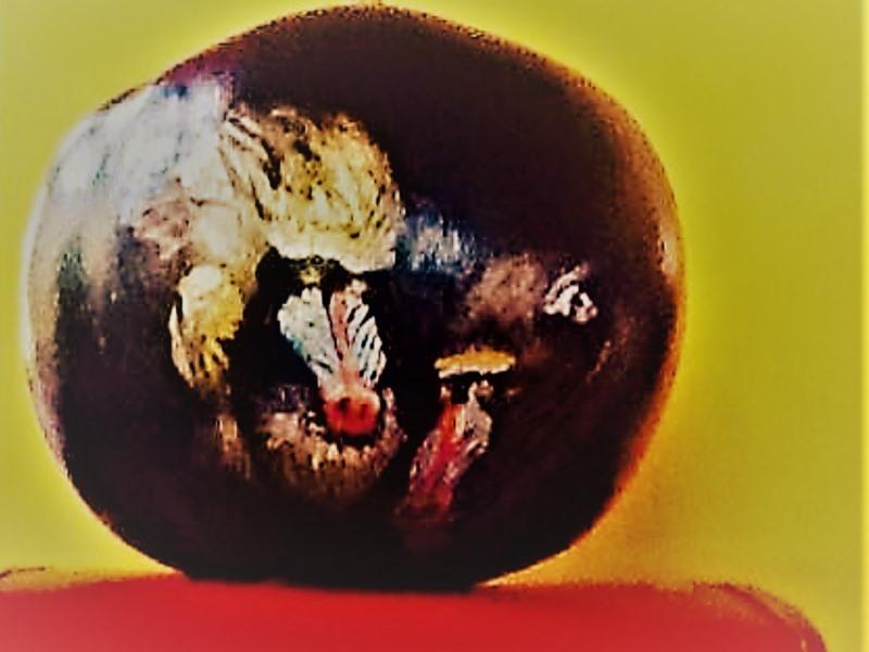 Gourds_034
